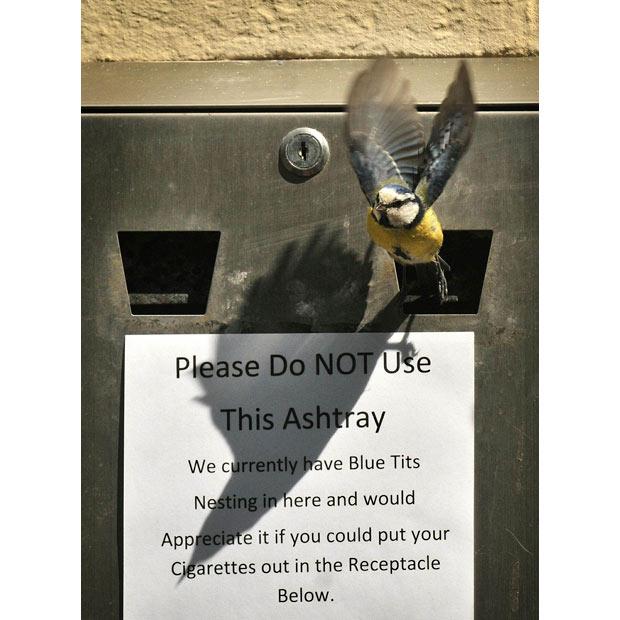 Bird Cigarette Bin