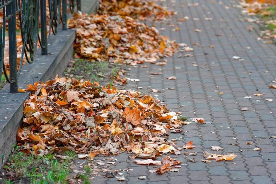 Leaves Pavement